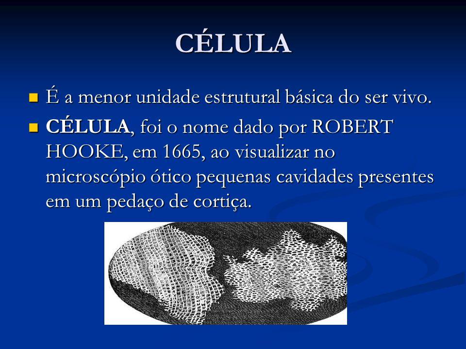 CÉLULA É a menor unidade estrutural básica do ser vivo. É a menor unidade estrutural básica do ser vivo. CÉLULA, foi o nome dado por ROBERT HOOKE, em