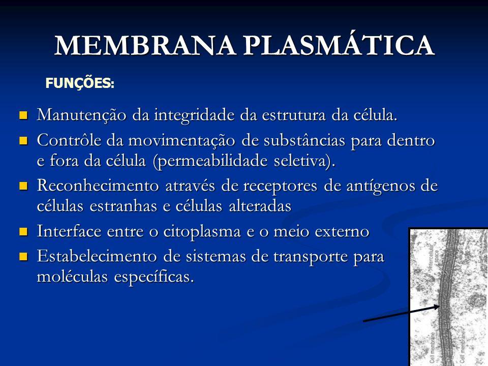 MEMBRANA PLASMÁTICA Manutenção da integridade da estrutura da célula. Manutenção da integridade da estrutura da célula. Contrôle da movimentação de su
