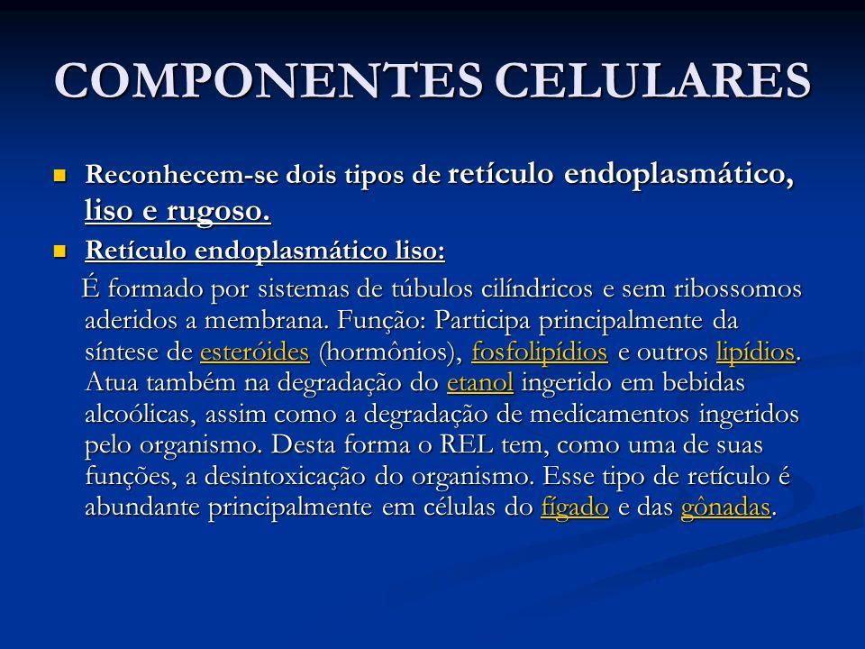 COMPONENTES CELULARES Reconhecem-se dois tipos de retículo endoplasmático, liso e rugoso. Reconhecem-se dois tipos de retículo endoplasmático, liso e