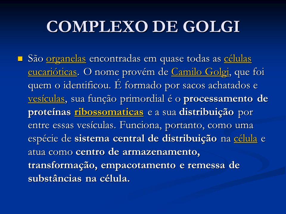 COMPLEXO DE GOLGI São organelas encontradas em quase todas as células eucarióticas. O nome provém de Camilo Golgi, que foi quem o identificou. É forma