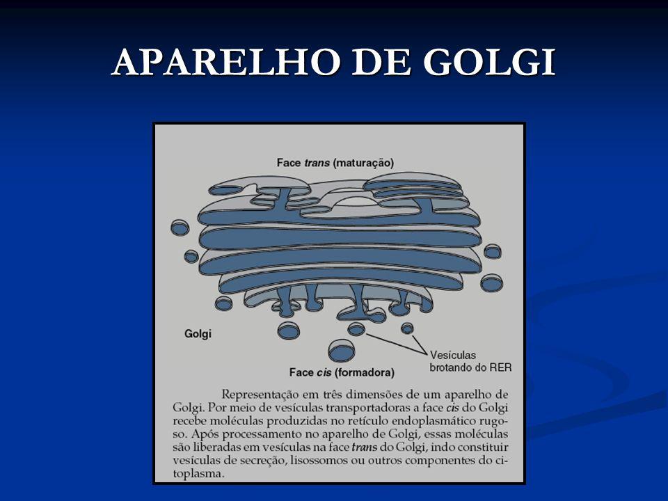 APARELHO DE GOLGI