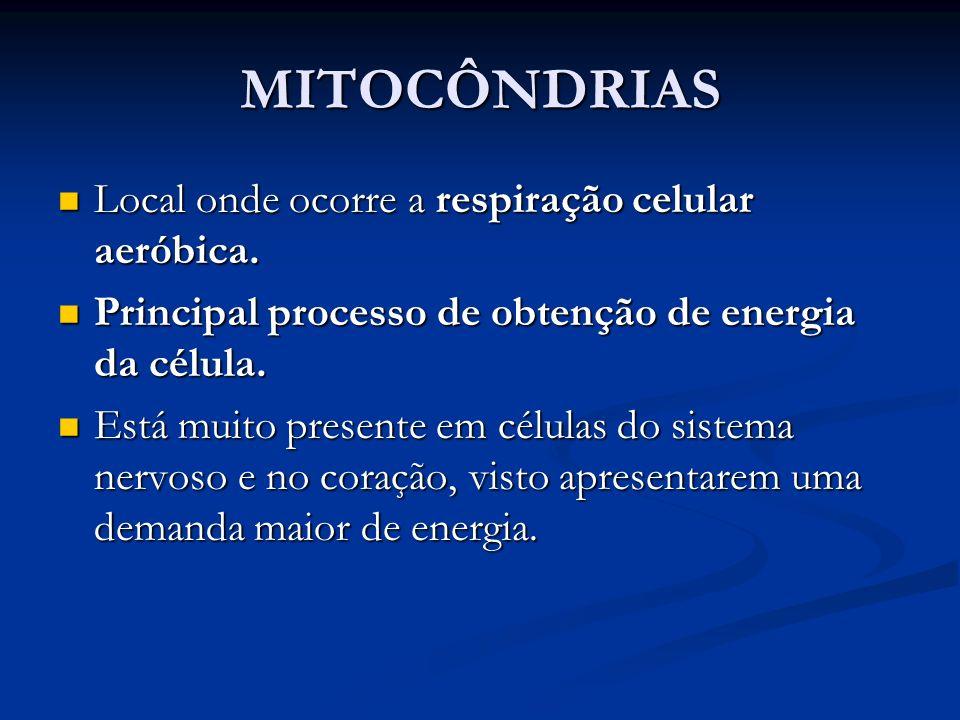 MITOCÔNDRIAS Local onde ocorre a respiração celular aeróbica. Local onde ocorre a respiração celular aeróbica. Principal processo de obtenção de energ