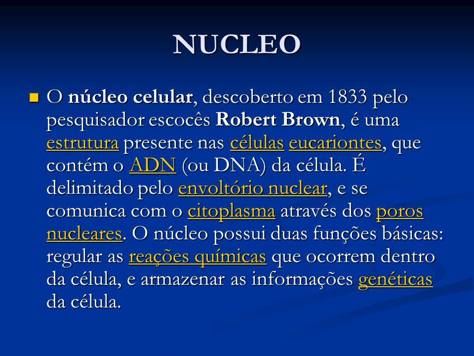 NUCLEO O núcleo celular, descoberto em 1833 pelo pesquisador escocês Robert Brown, é uma estrutura presente nas células eucariontes, que contém o ADN