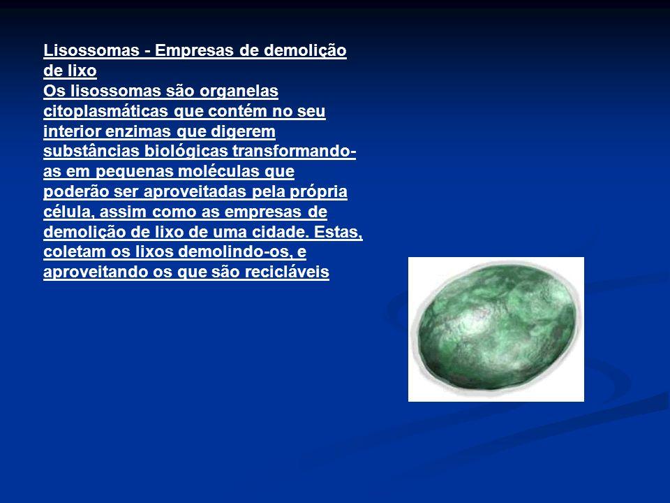 Lisossomas - Empresas de demolição de lixo Os lisossomas são organelas citoplasmáticas que contém no seu interior enzimas que digerem substâncias biol