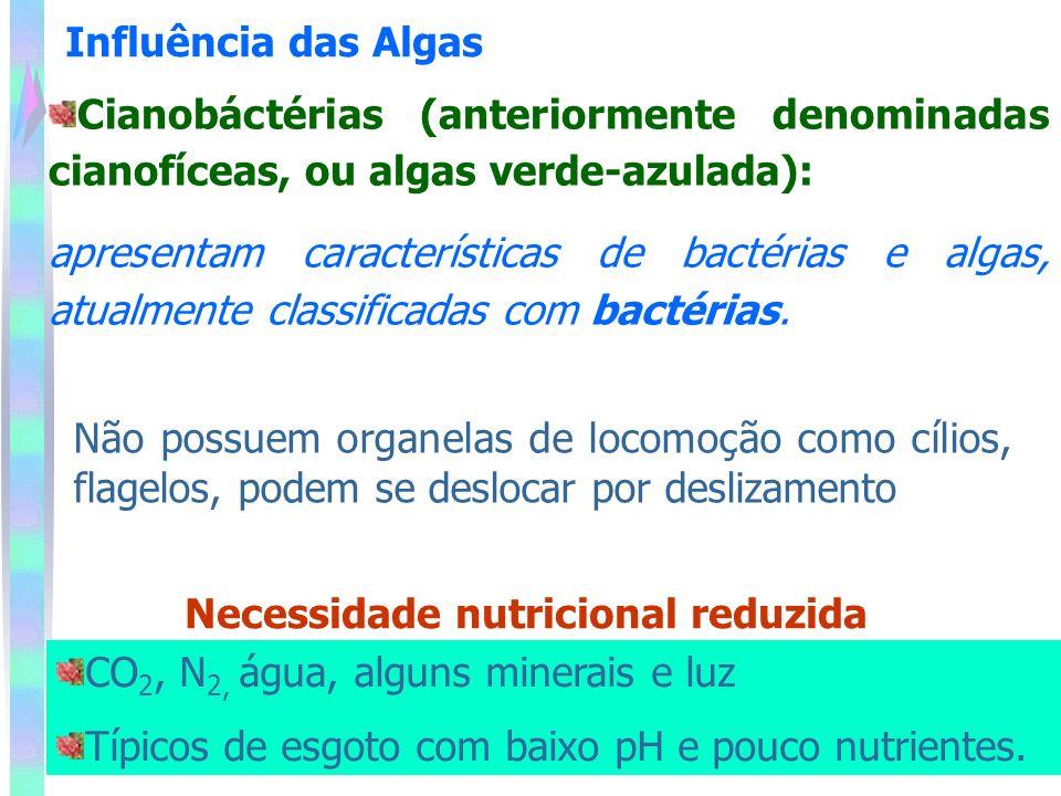 Cianobáctérias (anteriormente denominadas cianofíceas, ou algas verde-azulada): apresentam características de bactérias e algas, atualmente classificadas com bactérias.