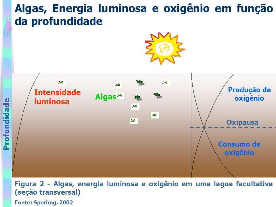 Algas, Energia luminosa e oxigênio em função da profundidade Figura 2 - Algas, energia luminosa e oxigênio em uma lagoa facultativa (seção transversal) Fonte: Sperling, 2002 Profundidade Consumo de oxigênio Produção de oxigênio Algas Intensidade luminosa Oxipausa