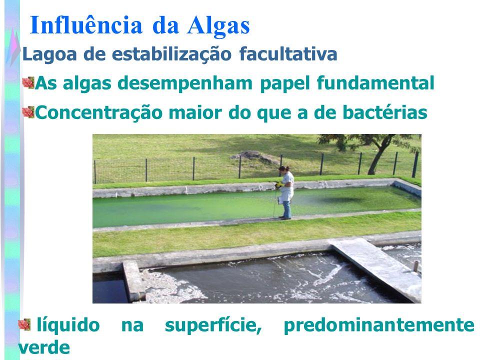 Influência da Algas Lagoa de estabilização facultativa As algas desempenham papel fundamental Concentração maior do que a de bactérias líquido na superfície, predominantemente verde
