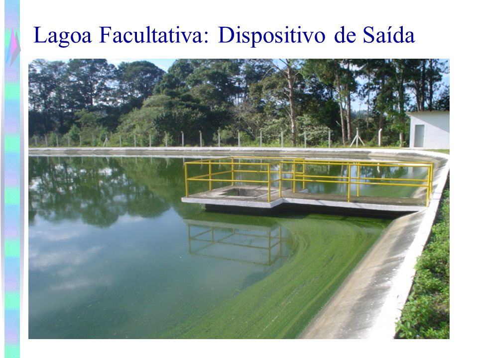clorofila a Presença de algas é medido na forma de clorofila a Concentração de clorofila em lagoas facultativas depende da: Carga aplicada e da temperatura Situam-se na faixa de 500 a 2000 mg/l Influência da Algas