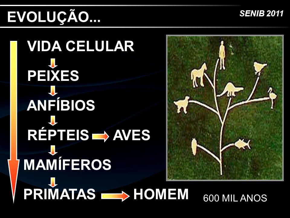 SENIB 2011 EVOLUÇÃO... VIDA CELULAR PEIXES ANFÍBIOS RÉPTEIS AVES MAMÍFEROS PRIMATAS HOMEM 600 MIL ANOS