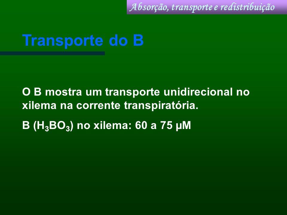 Transporte do B O B mostra um transporte unidirecional no xilema na corrente transpiratória. B (H 3 BO 3 ) no xilema: 60 a 75 µM Absorção, transporte