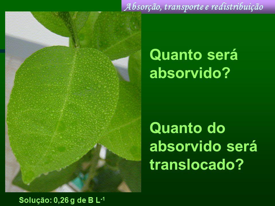Solução: 0,26 g de B L -1 Absorção, transporte e redistribuição Quanto será absorvido? Quanto do absorvido será translocado?