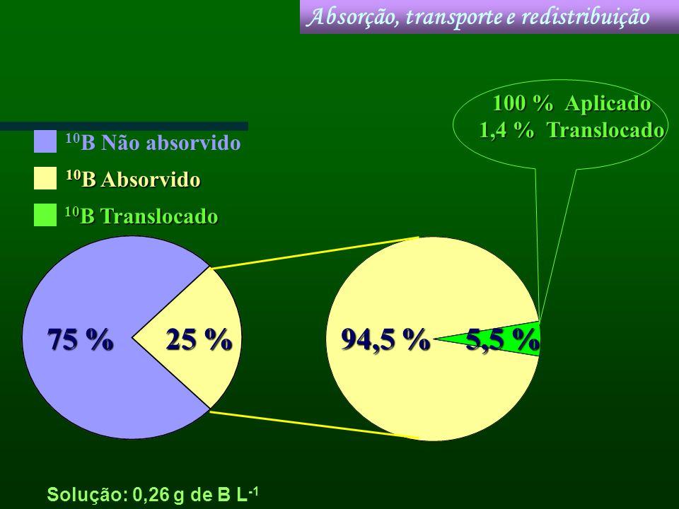 Solução: 0,26 g de B L -1 Absorção, transporte e redistribuição 25 % 75 % 5,5 % 94,5 % 10 B Não absorvido 10 B Absorvido 10 B Translocado 100 % Aplica