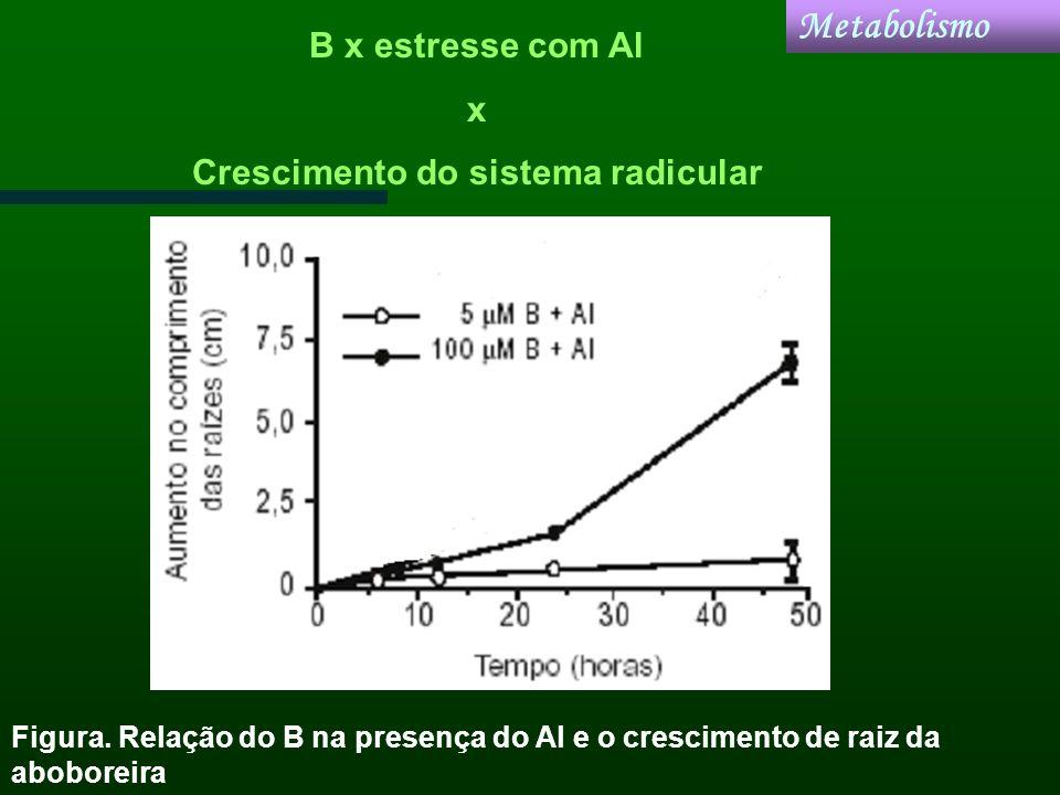 Metabolismo Figura. Relação do B na presença do Al e o crescimento de raiz da aboboreira B x estresse com Al x Crescimento do sistema radicular