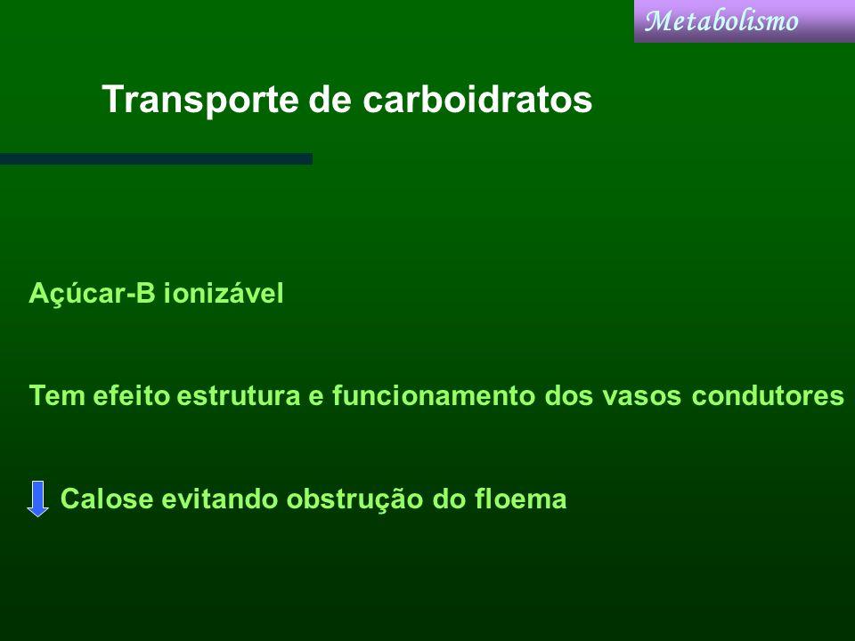 Transporte de carboidratos Açúcar-B ionizável Tem efeito estrutura e funcionamento dos vasos condutores Calose evitando obstrução do floema Metabolism