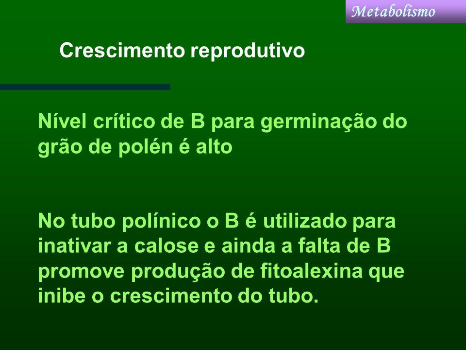 Crescimento reprodutivo Metabolismo Nível crítico de B para germinação do grão de polén é alto No tubo polínico o B é utilizado para inativar a calose