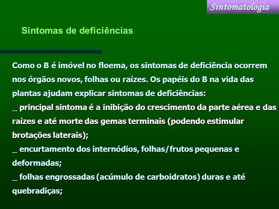 Como o B é imóvel no floema, os sintomas de deficiência ocorrem nos órgãos novos, folhas ou raízes. Os papéis do B na vida das plantas ajudam explicar