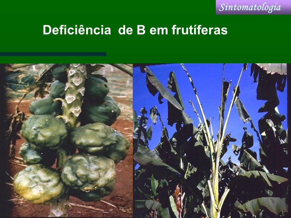 Deficiência de B em frutíferas Sintomatologia