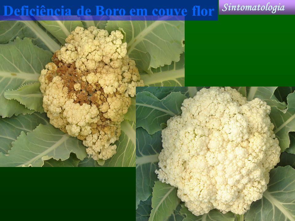 Deficiência de Boro em couve flor Sintomatologia