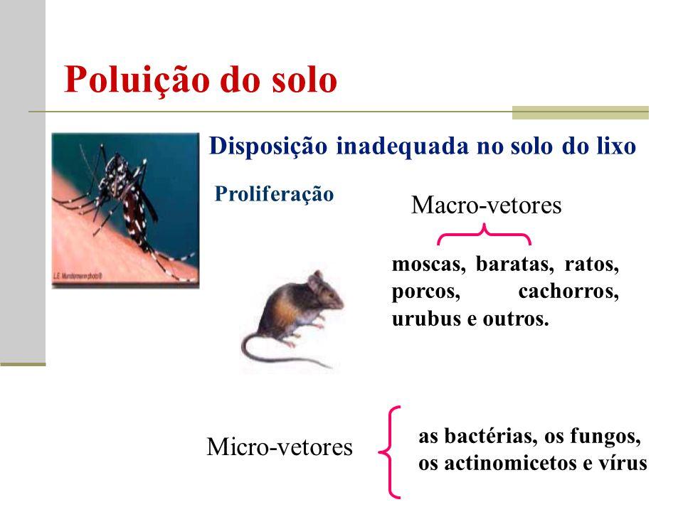 Disposição inadequada no solo do lixo Macro-vetores Micro-vetores moscas, baratas, ratos, porcos, cachorros, urubus e outros.