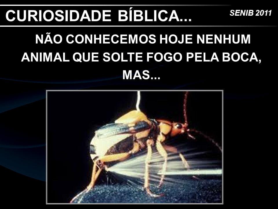 SENIB 2011 NÃO CONHECEMOS HOJE NENHUM ANIMAL QUE SOLTE FOGO PELA BOCA, MAS... CURIOSIDADE BÍBLICA...