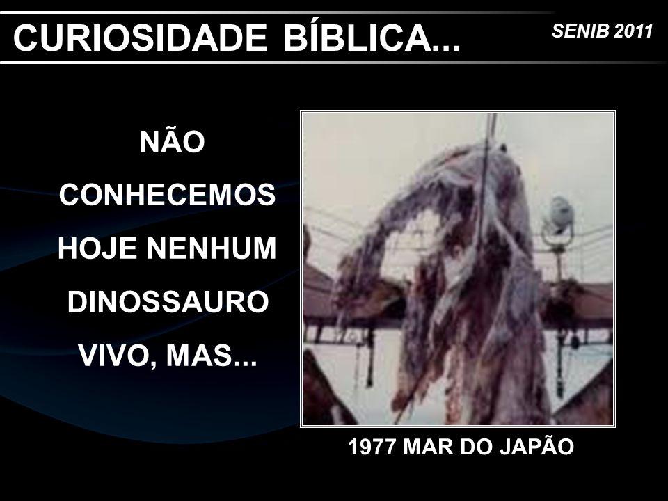 SENIB 2011 NÃO CONHECEMOS HOJE NENHUM DINOSSAURO VIVO, MAS... CURIOSIDADE BÍBLICA... 1977 MAR DO JAPÃO
