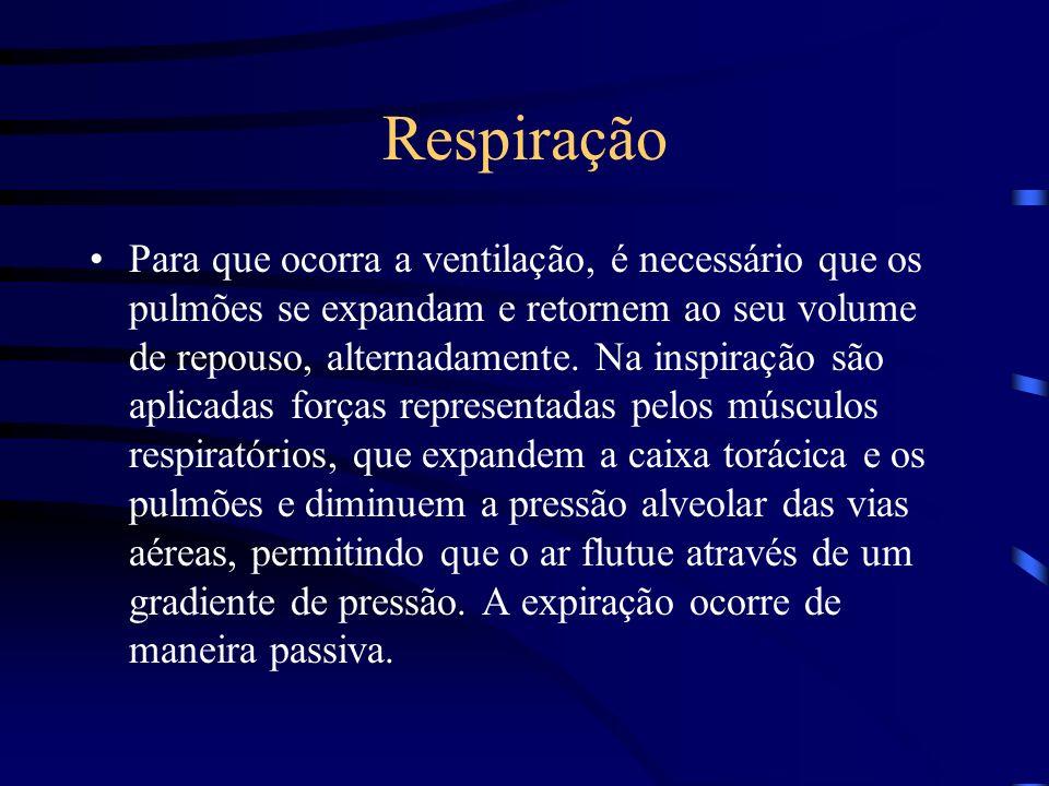 Respiração Para que ocorra a ventilação, é necessário que os pulmões se expandam e retornem ao seu volume de repouso, alternadamente. Na inspiração sã
