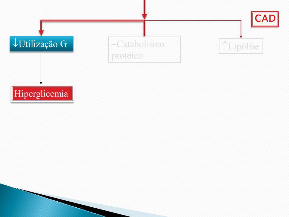 Catabolismo protéico Lipólise Utilização G Hiperglicemia CAD