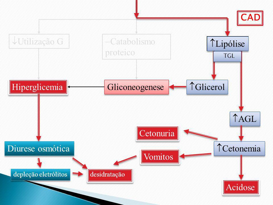 Catabolismo proteico Lipólise Utilização G Hiperglicemia Diurese osmótica Gliconeogenese Glicerol AGL Cetonemia Cetonuria Acidose desidratação depleçã