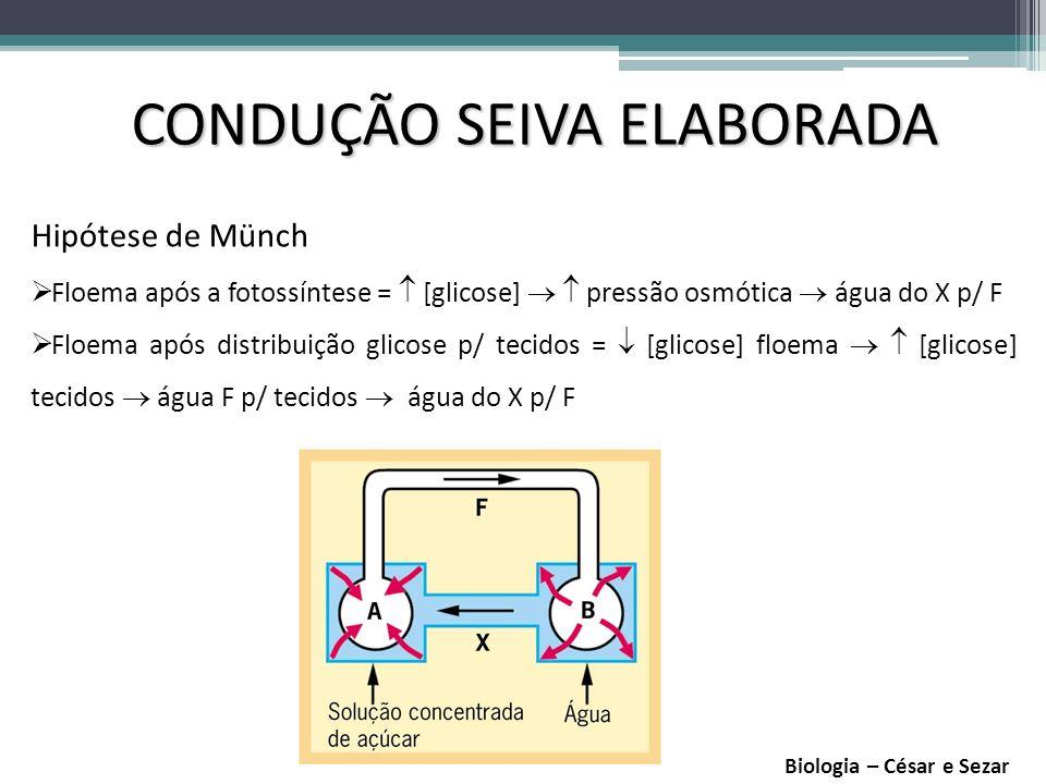 CONDUÇÃO SEIVA ELABORADA Anel de Malpighi