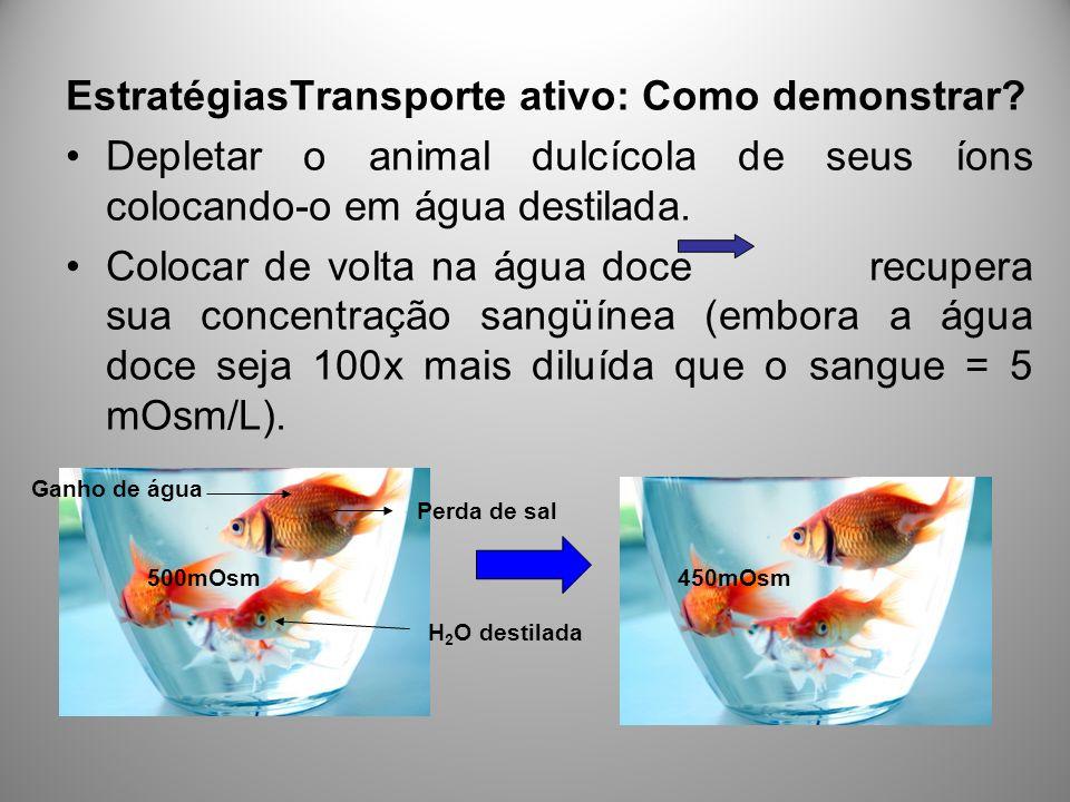 EstratégiasTransporte ativo: Como demonstrar? Depletar o animal dulcícola de seus íons colocando-o em água destilada. Colocar de volta na água doce re