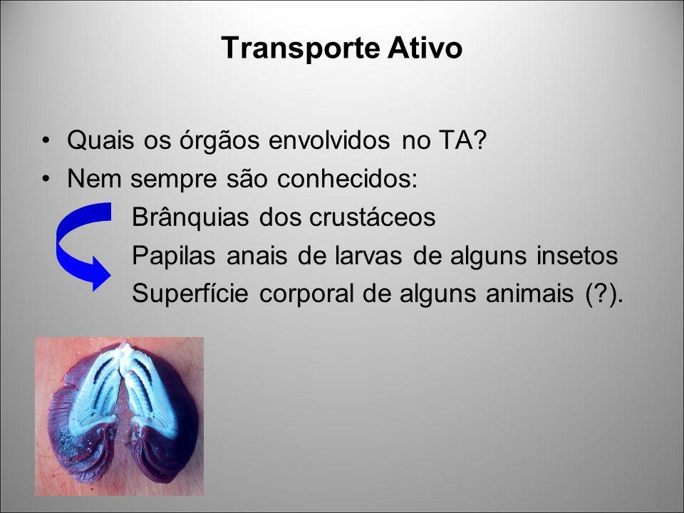 Transporte Ativo Quais os órgãos envolvidos no TA? Nem sempre são conhecidos: Brânquias dos crustáceos Papilas anais de larvas de alguns insetos Super