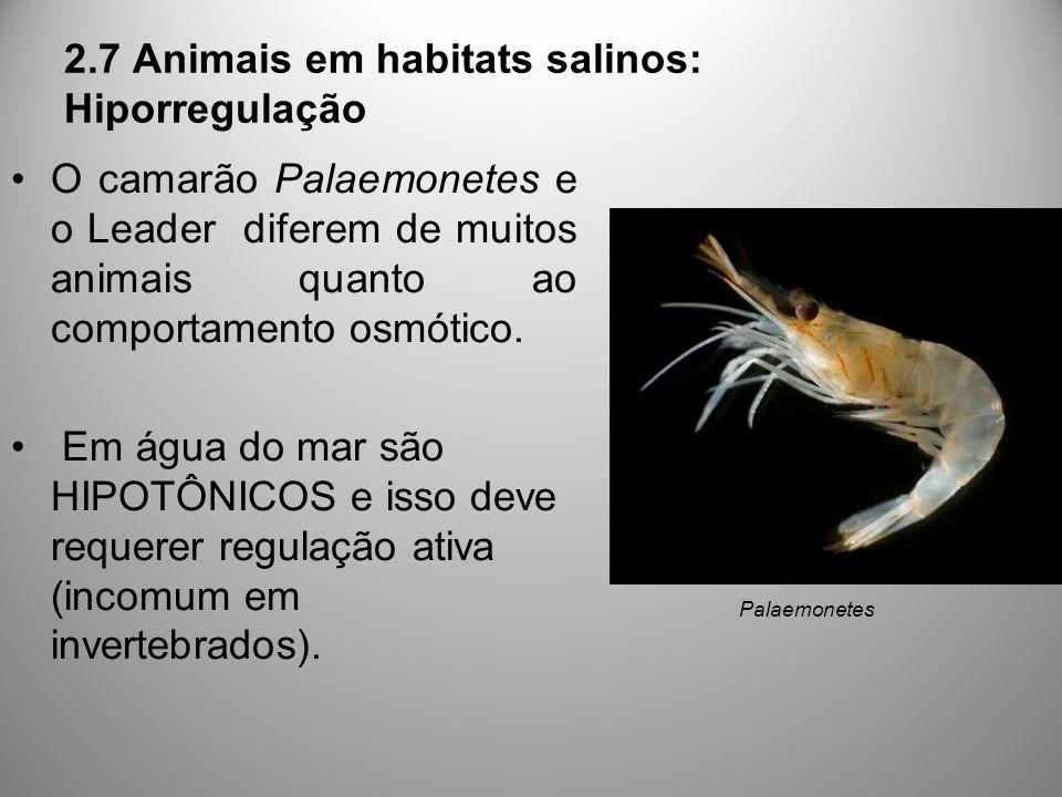 2.7 Animais em habitats salinos: Hiporregulação O camarão Palaemonetes e o Leader diferem de muitos animais quanto ao comportamento osmótico. Em água