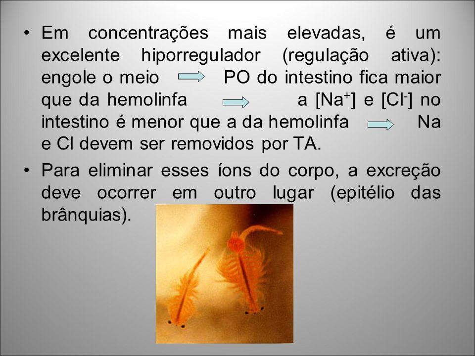 Em concentrações mais elevadas, é um excelente hiporregulador (regulação ativa): engole o meio PO do intestino fica maior que da hemolinfa a [Na + ] e [Cl - ] no intestino é menor que a da hemolinfa Na e Cl devem ser removidos por TA.