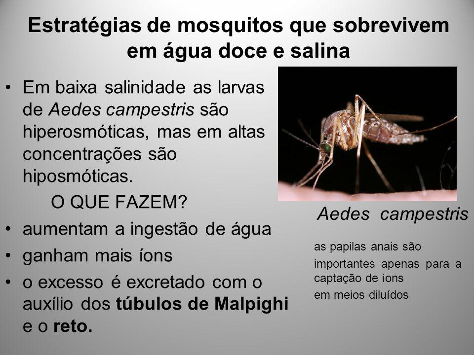 Estratégias de mosquitos que sobrevivem em água doce e salina Em baixa salinidade as larvas de Aedes campestris são hiperosmóticas, mas em altas concentrações são hiposmóticas.