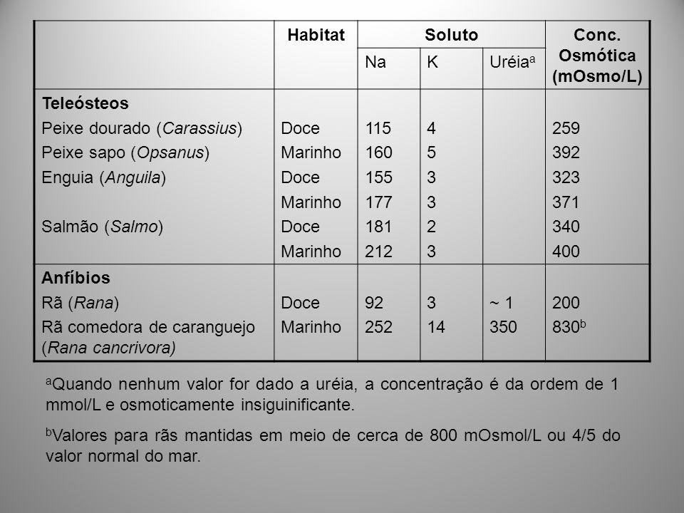 HabitatSolutoConc. Osmótica (mOsmo/L) NaKUréia a Teleósteos Peixe dourado (Carassius) Peixe sapo (Opsanus) Enguia (Anguila) Salmão (Salmo) Doce Marinh