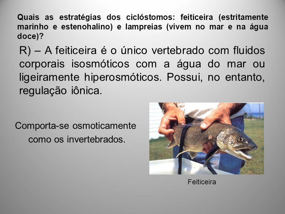 Quais as estratégias dos ciclóstomos: feiticeira (estritamente marinho e estenohalino) e lampreias (vivem no mar e na água doce).