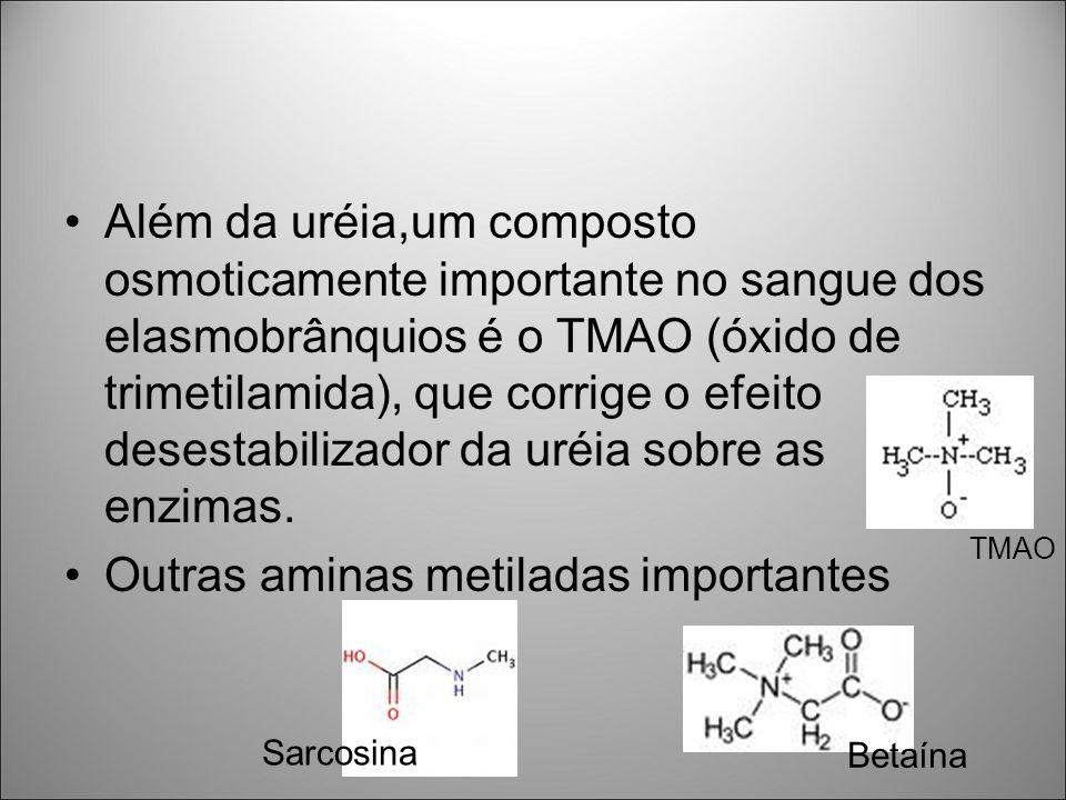 Além da uréia,um composto osmoticamente importante no sangue dos elasmobrânquios é o TMAO (óxido de trimetilamida), que corrige o efeito desestabiliza