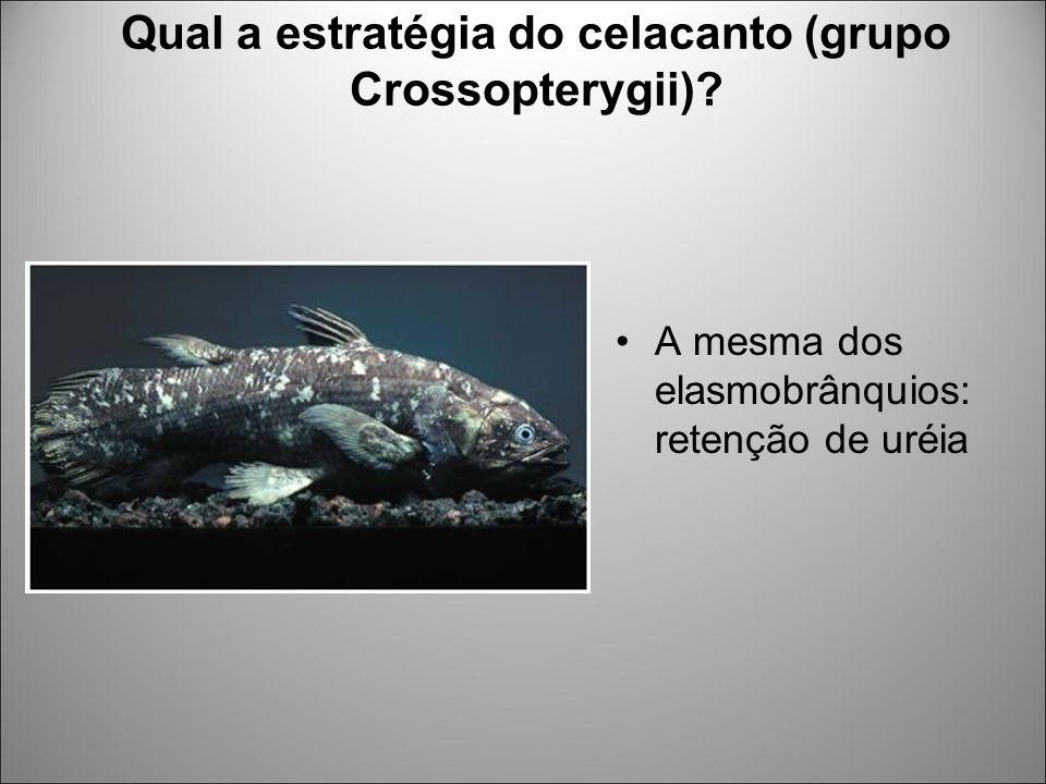 Qual a estratégia do celacanto (grupo Crossopterygii)? A mesma dos elasmobrânquios: retenção de uréia