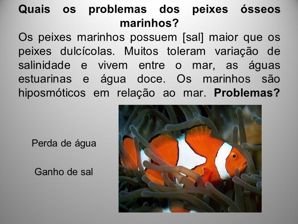Quais os problemas dos peixes ósseos marinhos? Os peixes marinhos possuem [sal] maior que os peixes dulcícolas. Muitos toleram variação de salinidade