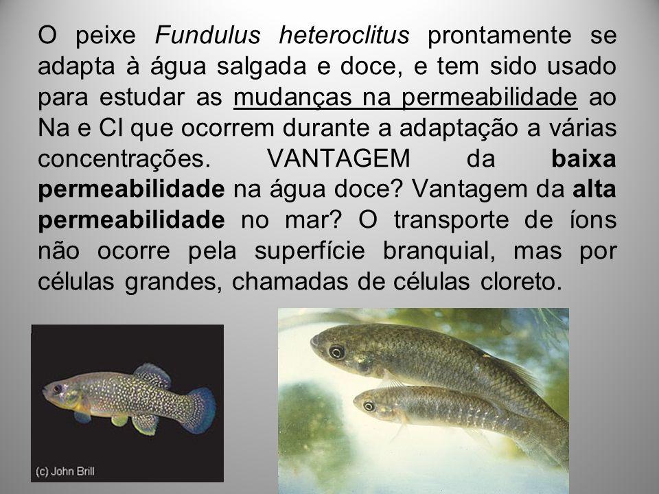 O peixe Fundulus heteroclitus prontamente se adapta à água salgada e doce, e tem sido usado para estudar as mudanças na permeabilidade ao Na e Cl que