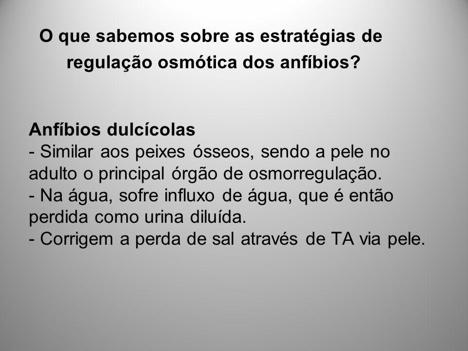 Anfíbios dulcícolas - Similar aos peixes ósseos, sendo a pele no adulto o principal órgão de osmorregulação.