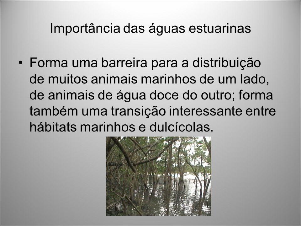 Importância das águas estuarinas Forma uma barreira para a distribuição de muitos animais marinhos de um lado, de animais de água doce do outro; forma