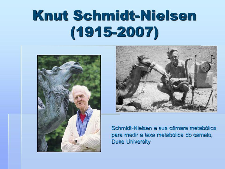 Knut Schmidt-Nielsen (1915-2007) Schmidt-Nielsen e sua câmara metabólica para medir a taxa metabólica do camelo, Duke University