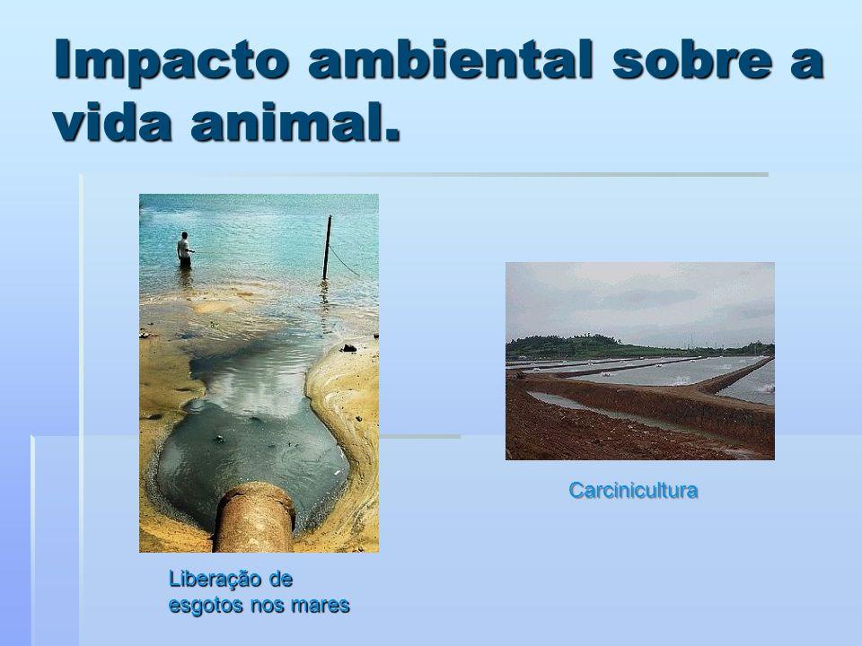 Impacto ambiental sobre a vida animal. Liberação de esgotos nos mares Carcinicultura
