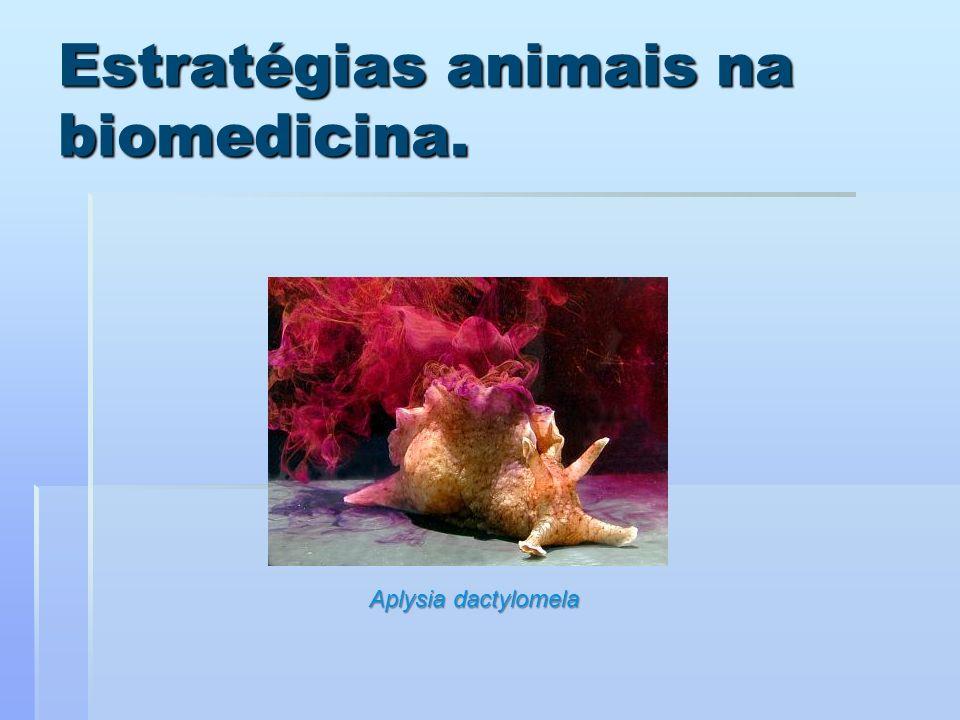 Estratégias animais na biomedicina. Aplysia dactylomela