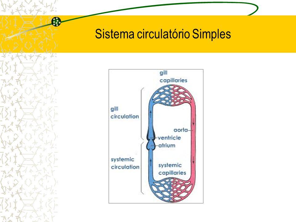 Sistema circulatório Simples