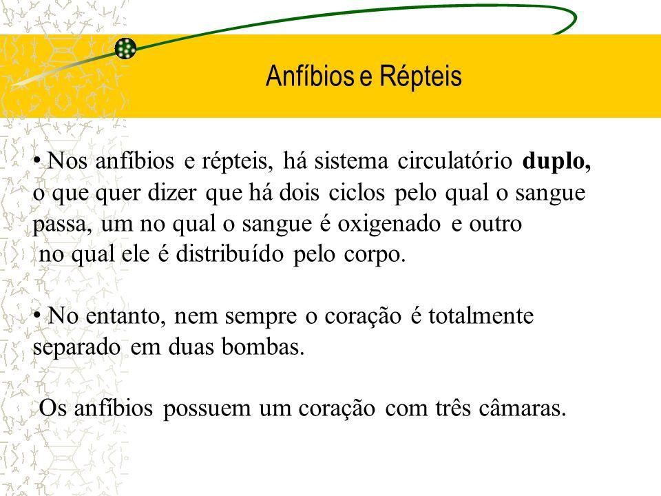 Anfíbios e Répteis Nos anfíbios e répteis, há sistema circulatório duplo, o que quer dizer que há dois ciclos pelo qual o sangue passa, um no qual o s