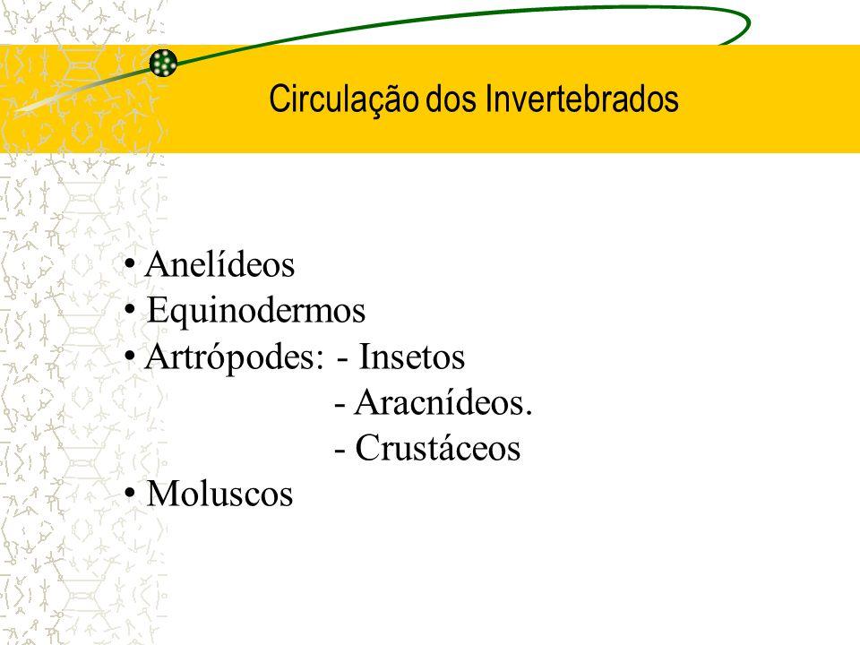 Circulação dos Invertebrados Anelídeos Equinodermos Artrópodes: - Insetos - Aracnídeos. - Crustáceos Moluscos