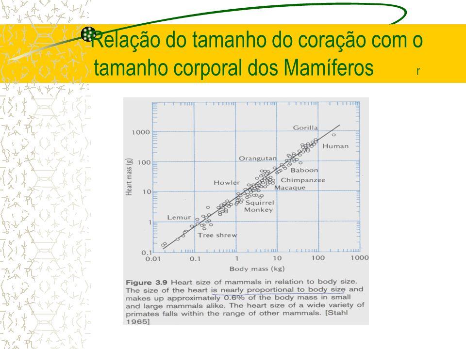 Relação do tamanho do coração com o tamanho corporal dos Mamíferos r