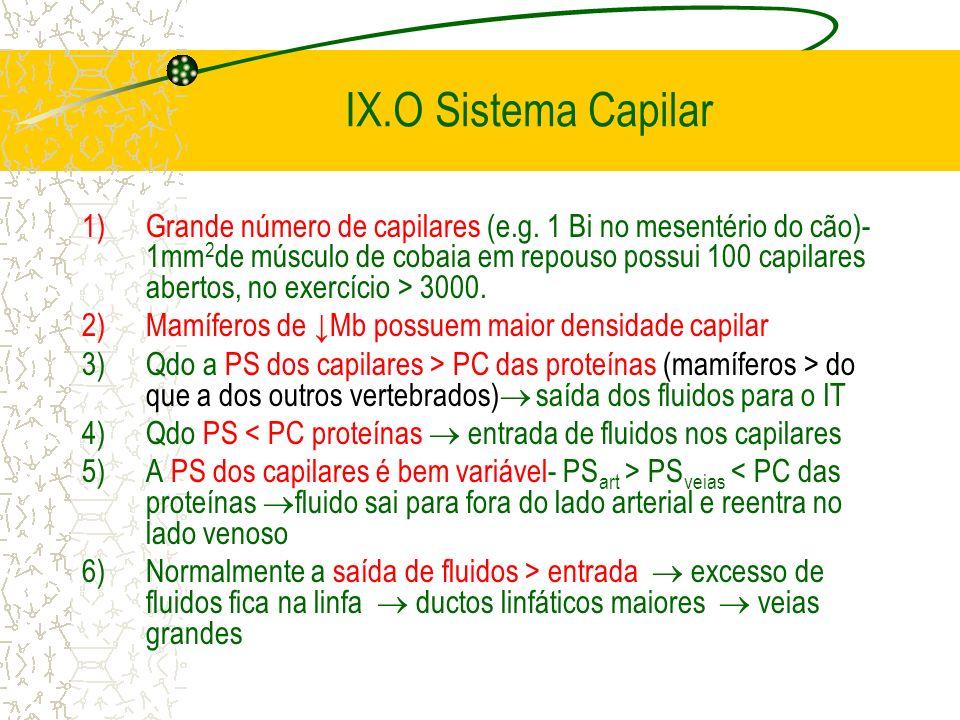 IX.O Sistema Capilar 1)Grande número de capilares (e.g. 1 Bi no mesentério do cão)- 1mm 2 de músculo de cobaia em repouso possui 100 capilares abertos